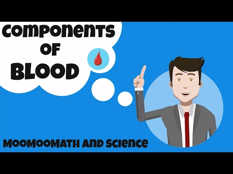 Components of Blood and their function