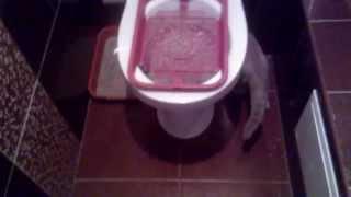 Приучаю кошку к унитазу своим методом / Accustom the cat to the toilet by his method