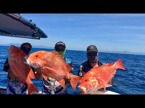 The Craziest Fishing Trip Out Of Port Douglas On The Great Barrier Reef 2019 Part 1