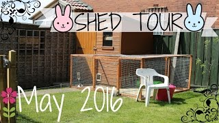Rabbit Shed Tour  - May 2016 -(Shed Tour May 2016 Please Comment, Like and Subscribe :), 2016-05-15T15:26:35.000Z)