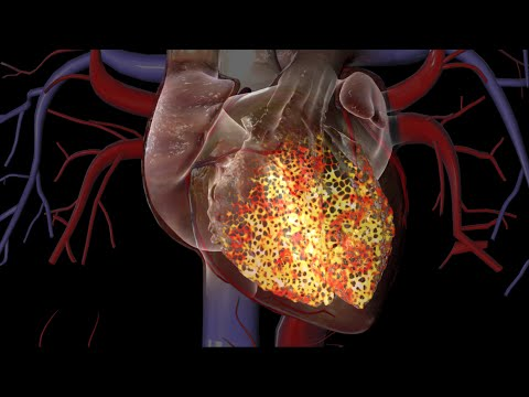 Cardiac Conduction System - YouTube