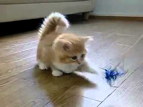Lustige Bilder Dicke Katze