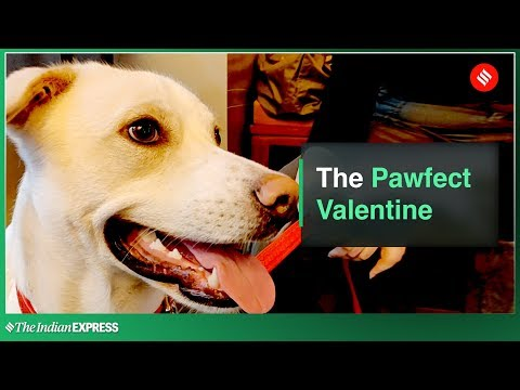 Valentine's Day Special: The Pawfect Valentine Mp3
