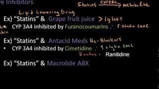 Competitive Inhibition & Statins - Pharmacokinetics Lect 18
