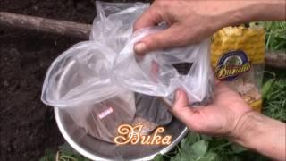 видео Сидерат фацелия - посев и выращивание