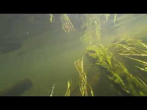 рыбалка на реке угре смоленская область