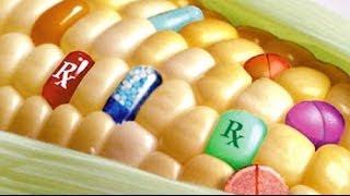 Dow Seeks USDA Approval of Agent Orange Corn
