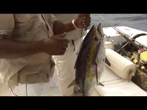 SHARK ATTACK: BELIZE SPORT FISHING