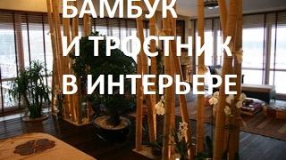 видео Бамбуковый дизайн в нашей жизни