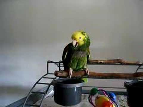 Crying Parrot - YouTube