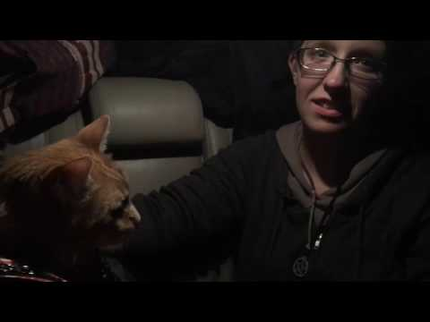 Traveling with Pets: Garfield in Tijuana, Mexico