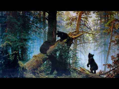 Утро в сосновом лесу.  Елена Казанцева. Авторское чтение