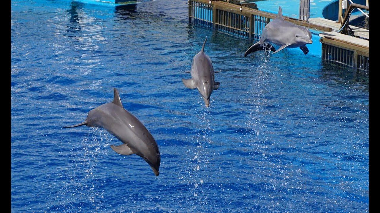 Dolphin show oceanographic valencia aquarium youtube for Aquarium valencia precio
