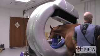 CT Scan of Standing Horse using Pegaso ™ HD CT Scanner thumbnail