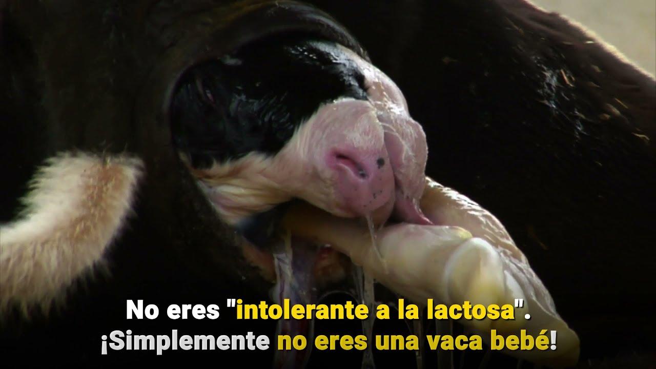 ¿Crees que eres intolerante a la lactosa?