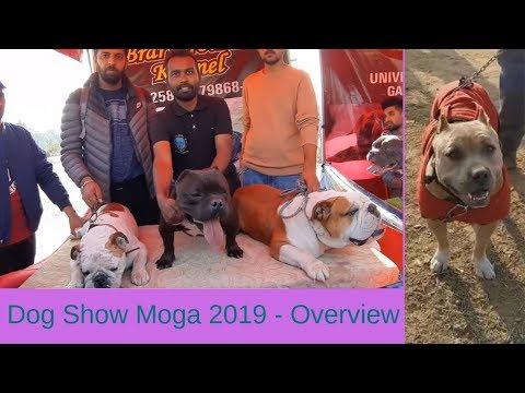 Dog Show Moga 2019 - Overview