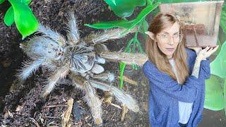 flooding my baboon tarantula out it's burrow (rehouse time)