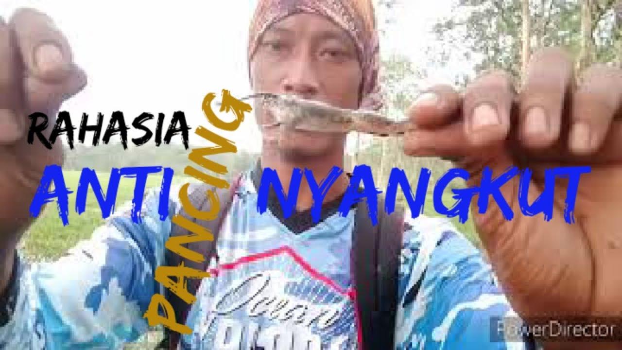 #mancingikan #mancingnekat cara mancing ikan gabus liar ...