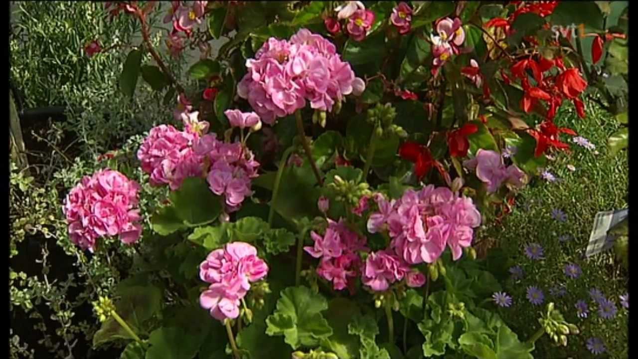 Trädgårdsinspiration och ätbara växter med Blomsterlandet by ...
