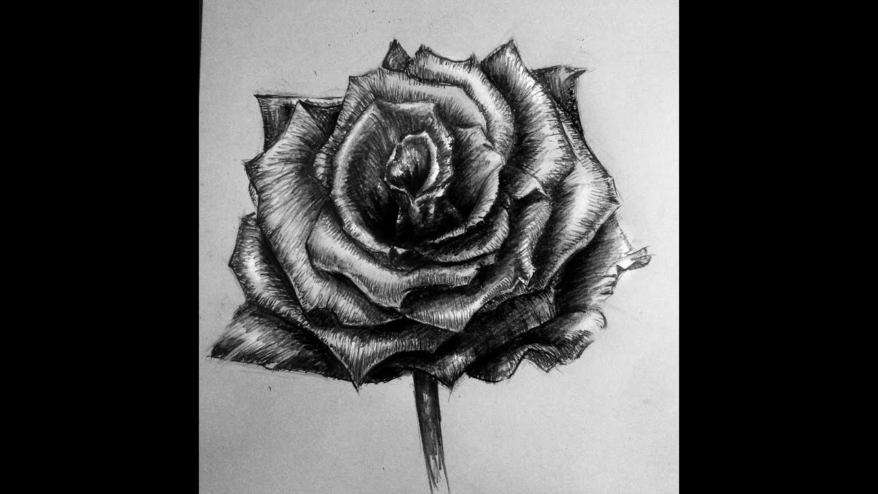 How to draw: rose from picture, shading rose - YouTube