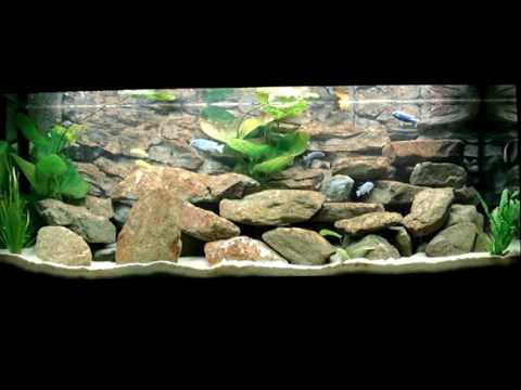 my juwel rio 400 liter malawi cichlids fishtank youtube. Black Bedroom Furniture Sets. Home Design Ideas