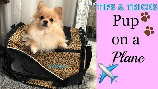 Tips for Flying With Your Dog On A Plane | Katziela Pet Carrier