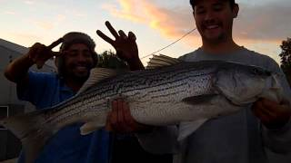 13+ Pound Striper Caught Off The Rio Vista Fishing Pier by VerdugoAdventures!