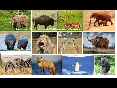 Save the Domestic Animals