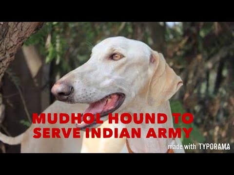 Native dog breed to serve Indian army first time