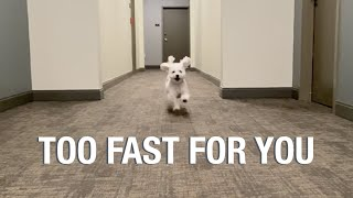 My Dog can't get enough Zoomies #2 // dog gets the zoomies | running non-stop | fast dog