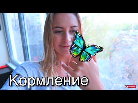 Как покормить бабочку в домашних условиях