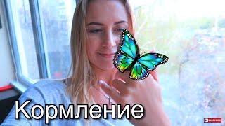 как сделать домик для бабочки в домашних условиях