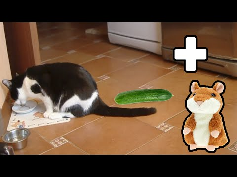 CUCUMBER CAT and TALKING HAMSTER