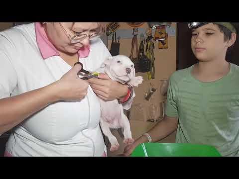 Вопрос: Как определить, что у щенка глисты?