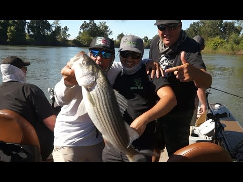 Striped Bass Fishing the Sacramento River live bait and