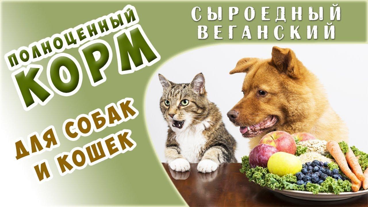 8 in 1 excel витамины для собак приобретайте по выгодной цене ✌ в интернет магазине ⭐ anyzoo. Ru ⭐ на выбор 19 вариантов доставки!. ☎+7( 495)646-8834 скидки, акции!. Витамины 8 в 1 эксель собаке огромный выбор в зоомагазине энизоо.