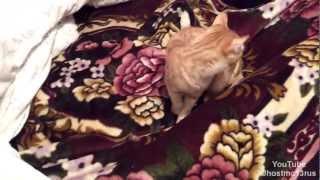 Кот Тима - Поймаю как не крути / смешные коты / funny cat