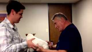Chiropractic Adjustment of A Dog By Your Houston Chiropractor Dr Gregory Johnson