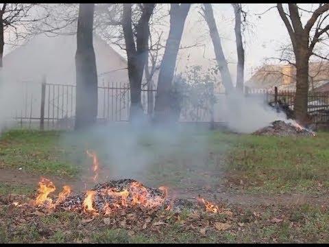 Опале листя: спалювати чи компостувати? - YouTube