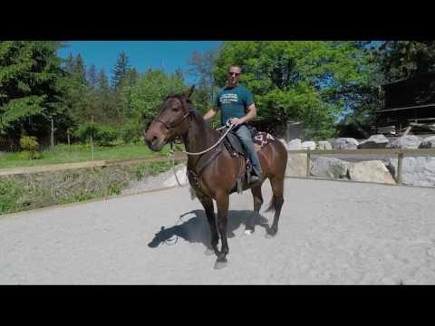 Benny The Standardbred : Horse Training Part 1, Arena Work, Plastic Bags And Riding With Leg Aids