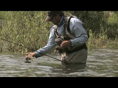 Fly Fishing Trout On The Salmon River