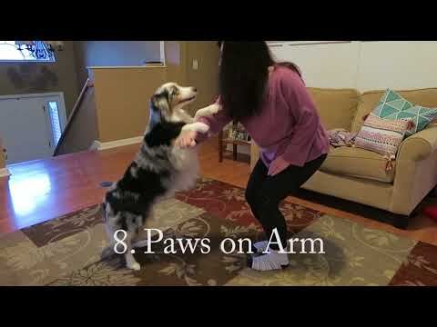Chloe's Intermediate Tricks for Do More With Your Dog