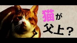 「猫侍」製作チームが再び贈る、新たな痛快癒し活劇、映画『猫忍』が5/2...