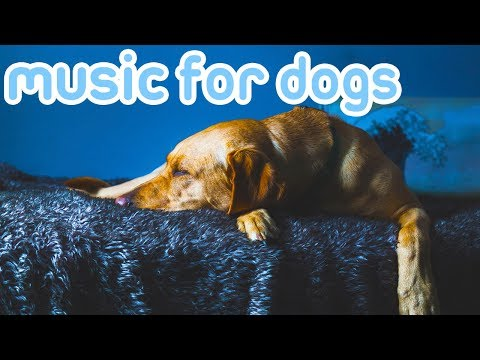 11-hours-of-deep-sleep-music-for-dogs!-pet-therapy-music-for-anxiety!