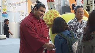 大相撲の新大関高安関(27)=本名高安晃、茨城県出身、田子ノ浦部屋=...