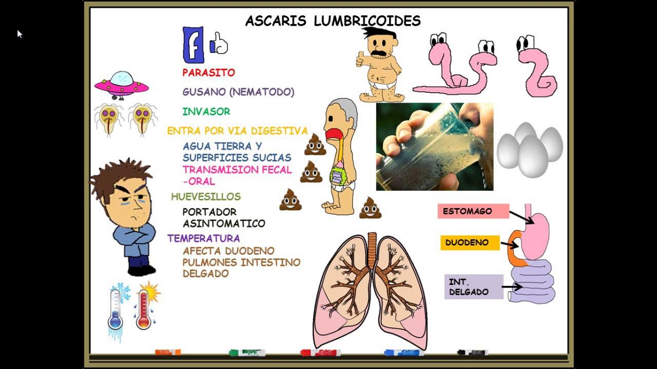 ascaris lumbricoides ppt en español