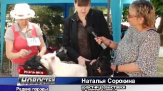 Любимцы фараонов и другие редкие породы собак - впервые в Крыму
