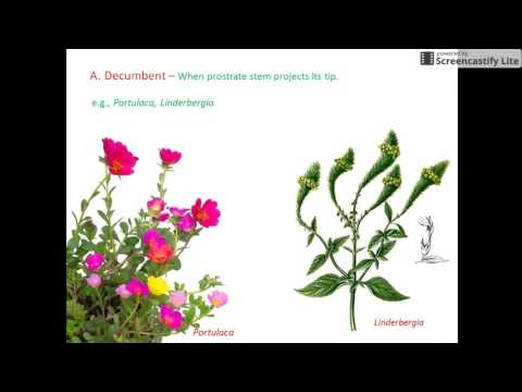 Plant Morphology for NEET and AIIMS (STEM-2)