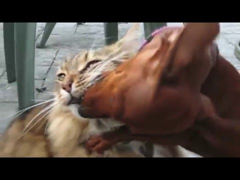 Funny cats,  funny dogs, cute animals - Animal Compilation April 2016 | Funny Berry Animals #64