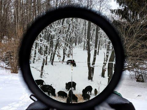 Wild Boar Hunting In Romania,Chasse Aux Sangliers En Roumanie,Keilerjagd In Rumänien